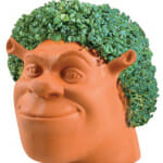 Shrek Chia Pet